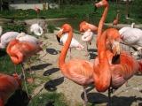 Zoo Dvůr Kr.